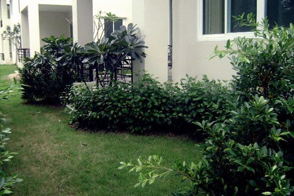botanicas-villor012-B223