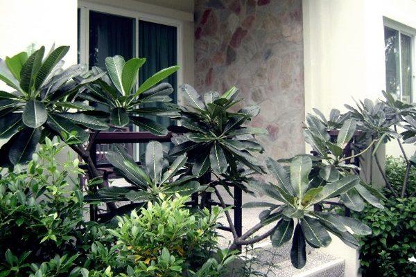 botanicas-villor014-B223
